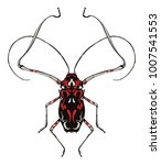 harlequin beetle insect... | Shutterstock .eps vector #1007541553