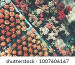 beautiful cactus background | Shutterstock . vector #1007606167