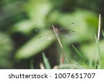 close up of dragonfly is on the ... | Shutterstock . vector #1007651707