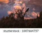 Stunning Silhouette Of A Crow...