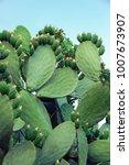 fresh succulent cactus closeup... | Shutterstock . vector #1007673907