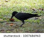Big Black Bird In The City....