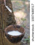 Small photo of Milky latex extracted from rubber tree (Hevea Brasiliensis) as a source of natural rubber