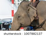 elephants asian close up   Shutterstock . vector #1007882137