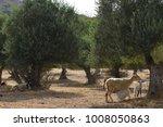 mountain goats  near the trees | Shutterstock . vector #1008050863