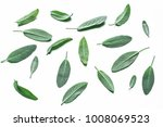 fresh velvet leaves of garden... | Shutterstock . vector #1008069523