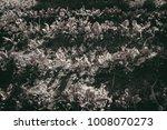 gardening  weeding weeds....   Shutterstock . vector #1008070273