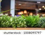 potted decorative plants in... | Shutterstock . vector #1008095797