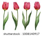 Watercolor Set Of Tulips  Hand...