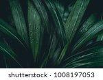 green leaves. low key modern... | Shutterstock . vector #1008197053