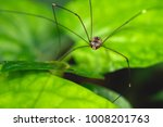 Small photo of Spiders are air-breathing arthropods that have eight legs and chelicerae with fangs that inject venom. (macro photography)