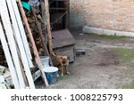 the dog in the yard in the... | Shutterstock . vector #1008225793