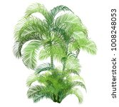palm tree  dypsis cabadae .... | Shutterstock .eps vector #1008248053