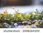 spring. meadow wild beautiful... | Shutterstock . vector #1008264103
