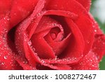 red rose with droplets of dew ... | Shutterstock . vector #1008272467