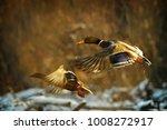 duck fly in winter. two duck is ... | Shutterstock . vector #1008272917