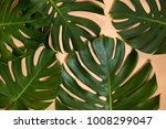 monstera leaves decorated over... | Shutterstock . vector #1008299047