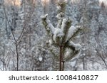 small pine covered with snow in ... | Shutterstock . vector #1008410827