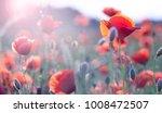 field of bright red  poppy... | Shutterstock . vector #1008472507