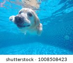 the dog is diving | Shutterstock . vector #1008508423
