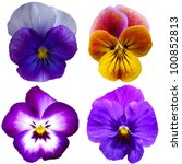 Four Pansies On White