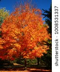 Small photo of Beautiful Trees in Full Autumn Color; Dexter, MI