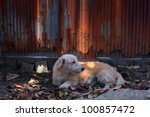 street dog lie on soil field - stock photo