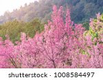 pink blossoms on the branch...   Shutterstock . vector #1008584497