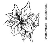 lily sketch drawing of a flower.... | Shutterstock .eps vector #1008808003