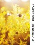 beautiful wild meadow flowers... | Shutterstock . vector #1008833923