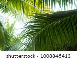 palm leaves in the park | Shutterstock . vector #1008845413