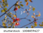 the moon and blur of bombax... | Shutterstock . vector #1008859627