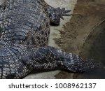 crocodile saltwater skin. hi res | Shutterstock . vector #1008962137