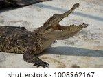 crocodile saltwater thailand.... | Shutterstock . vector #1008962167
