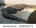 crocodile saltwater thailand.... | Shutterstock . vector #1008962173