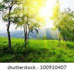 Green Birch Tree In Sunlight