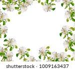 flowering branch of apple... | Shutterstock . vector #1009163437
