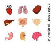 human internal organ icon set.... | Shutterstock .eps vector #1009210513