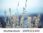 beautiful soft big meadow wild... | Shutterstock . vector #1009221343