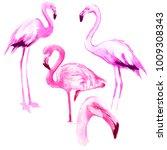flamingo  birds isolated on... | Shutterstock . vector #1009308343