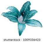 turquoise white flower  lily on ... | Shutterstock . vector #1009336423