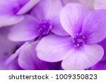 Macro Photo Of Purple Blossom...