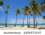 caribbean beach full of palm... | Shutterstock . vector #1009373197
