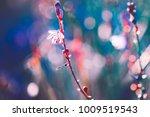 spring flowers on bright... | Shutterstock . vector #1009519543