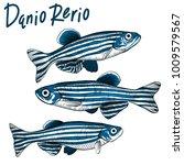 hand drawn vector danio rerio... | Shutterstock .eps vector #1009579567