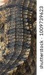 crocodile saltwater skin. hi res | Shutterstock . vector #1009739623