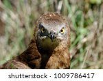 the look of the bird of prey.... | Shutterstock . vector #1009786417
