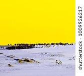 desert. canary islands. surreal ... | Shutterstock . vector #1009926217