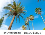 palm trees on blue sky... | Shutterstock . vector #1010011873