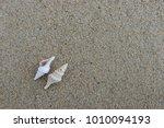 fossil shell on the sand beach  ... | Shutterstock . vector #1010094193